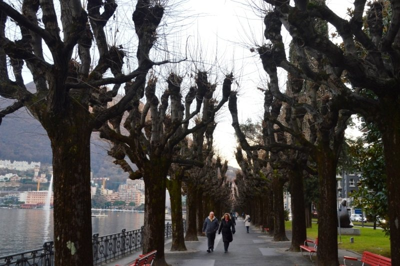 Unique trees in Lugano, Switzerland
